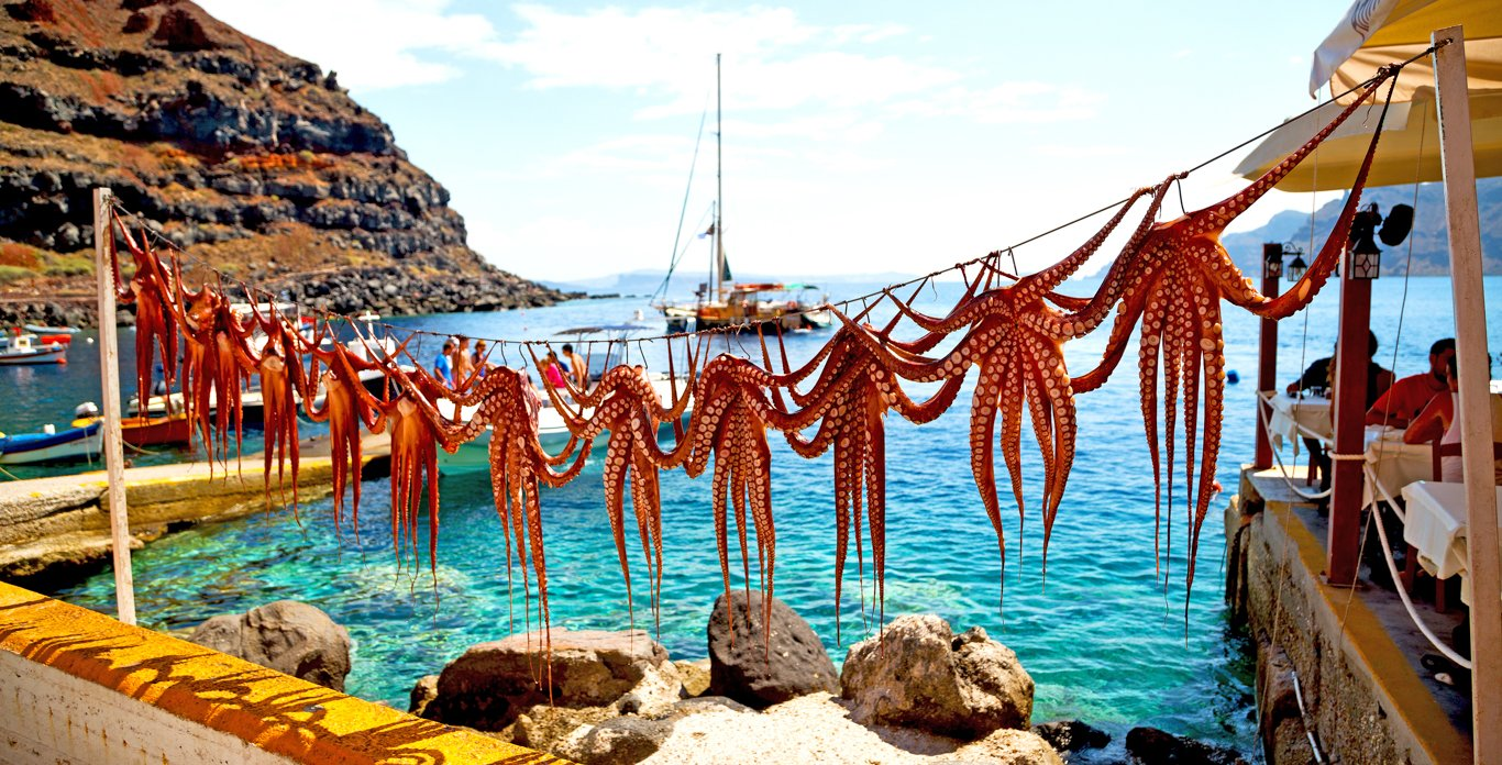 Octopus Drying on Dock in Greece