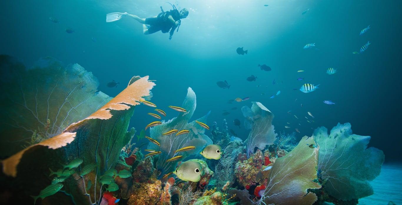 5 Best Caribbean Super Yacht Charters for Scuba Diving