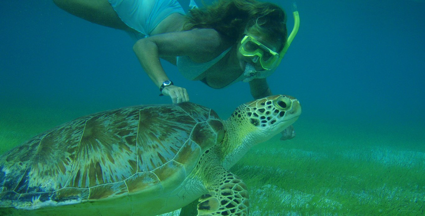 Scuba diving with the turtles - Luxury liveaboard diving - BVI Scuba diving