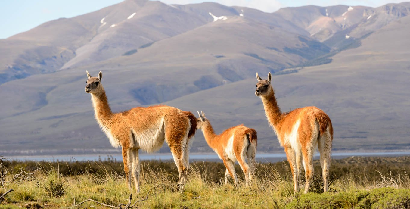 Wildlife on a Patagonia Yacht Charter
