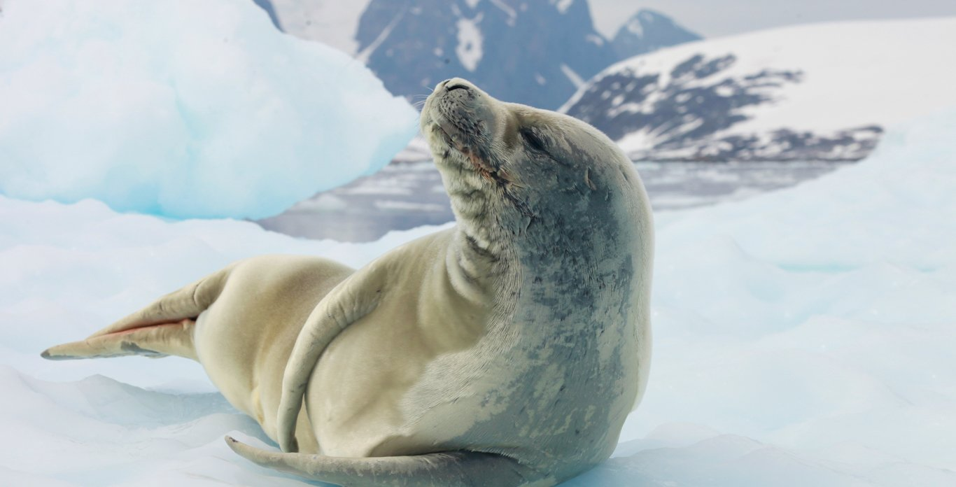 Seal on Antarctica Expedition Cruise