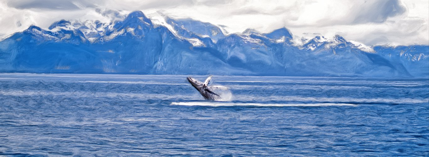 Breaching whale on Alaska Yacht Charters