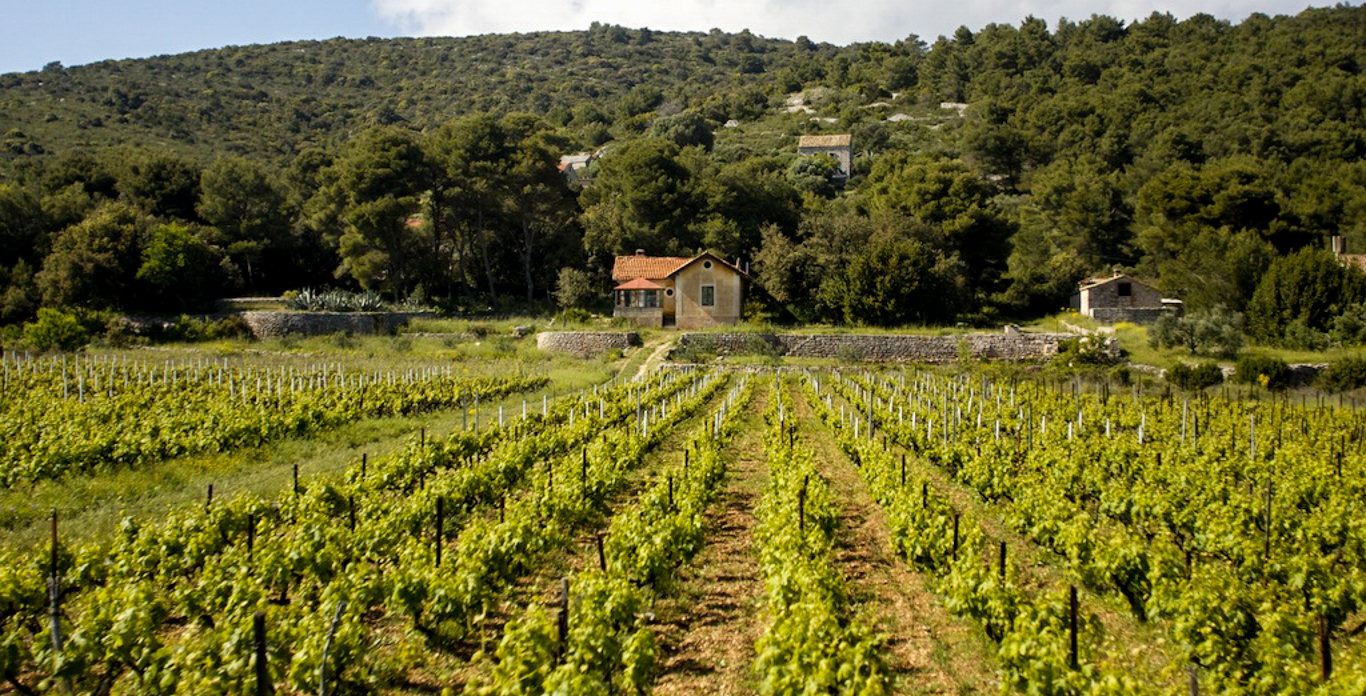 Anchor your chartered Hvar yacht and explore the vineyards and countryside.
