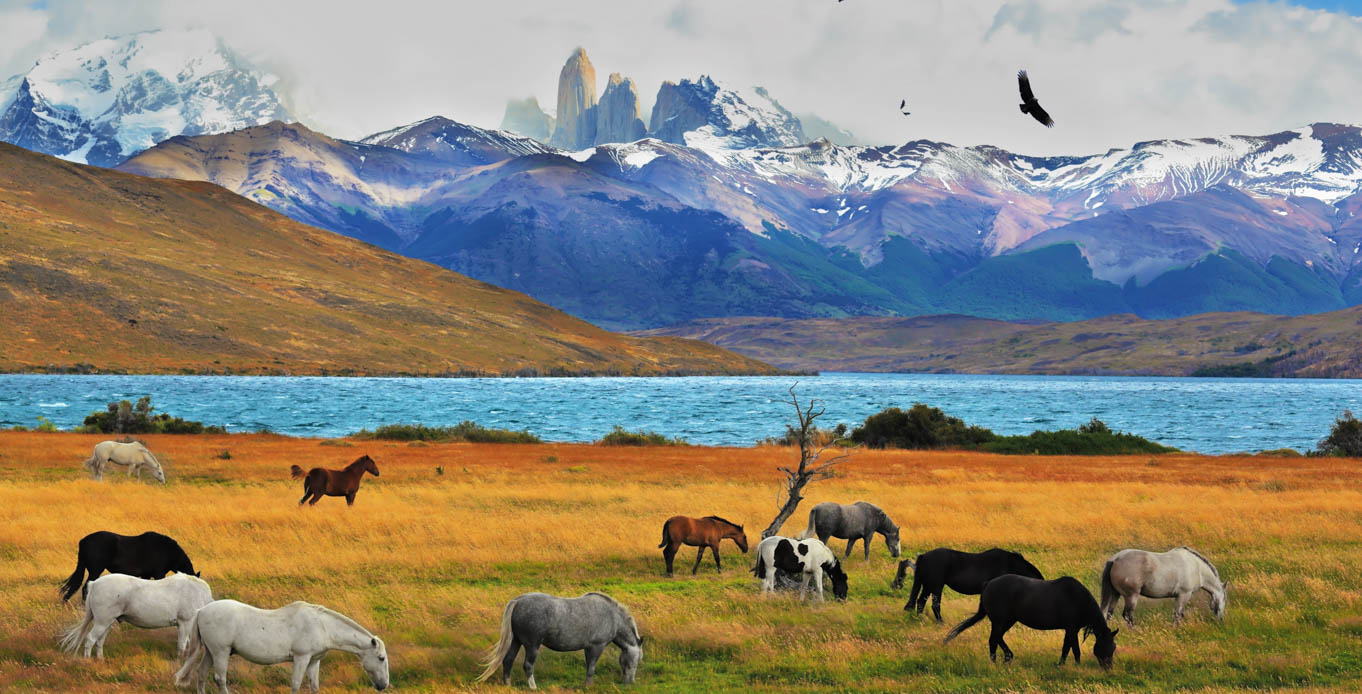 View of field with horses and mountains in the background while on a Patagonia Yacht Charter Itinerary